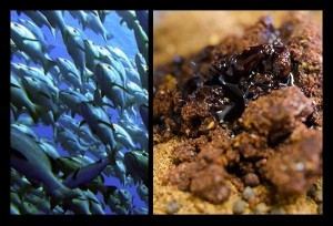 Fish Method Mix